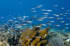 bunaken-diving