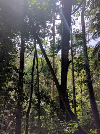 berembun-forest-reserve-1
