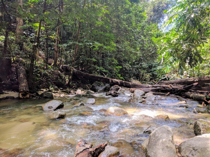 berembun-forest-reserve-3