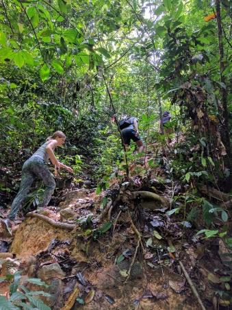 berembun-forest-reserve-4