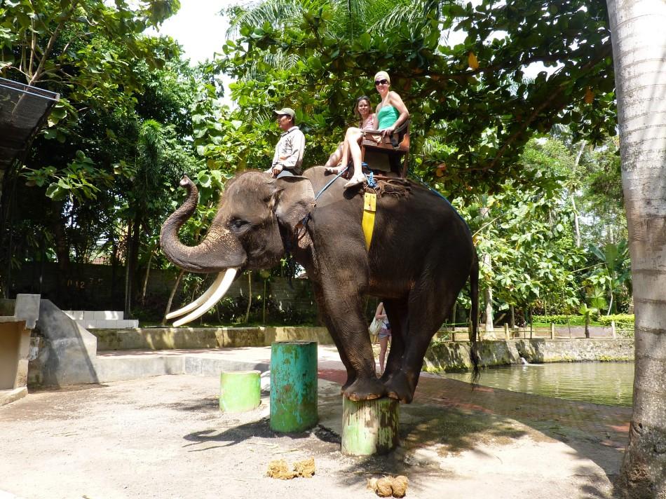 Elephant Bali 2