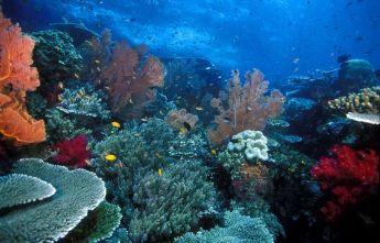 Pulau Misool Reef 1