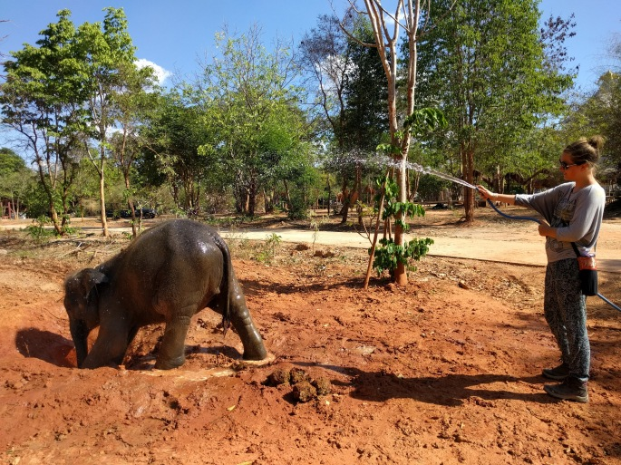 Baby elephant showering