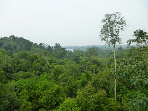 MacRitchie Reservoir Tree Top