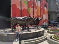 Hong Kong bulls
