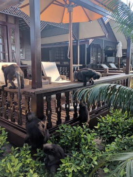 Lutong monkey's Perhentian Islands