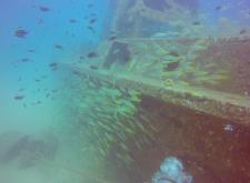 Perhentian diving - fish