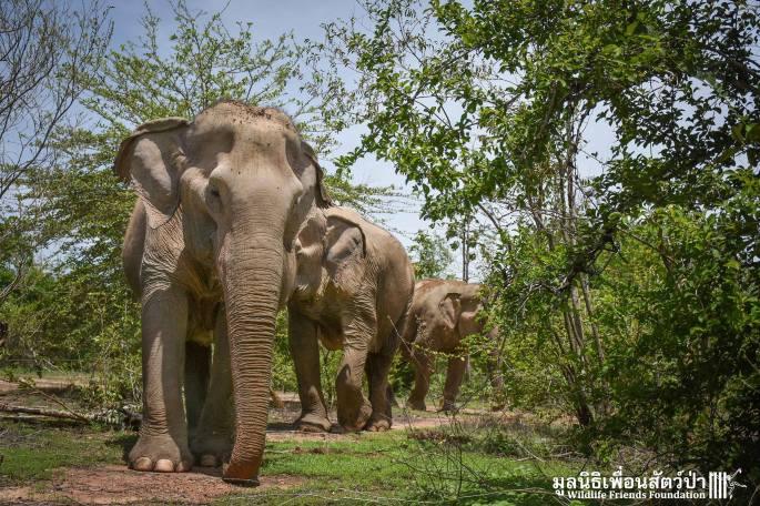 WFFT Elephant Refuge