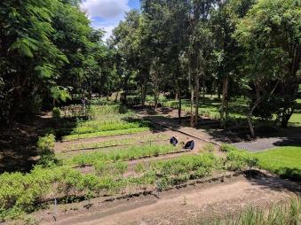 Narritaya Resort & Spa - vegetable garden